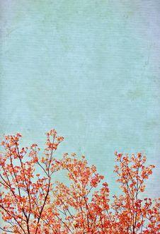 Free Flowering Plum Tree Grunge Background Royalty Free Stock Photo - 6907935