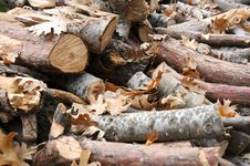 Free Firewood With Leaves Royalty Free Stock Images - 6908779