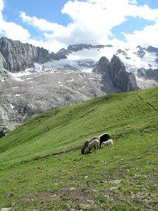 Free Sheeps In The Mountains Royalty Free Stock Image - 6909176