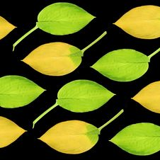 Free Hosta Leaves Stock Images - 6909434