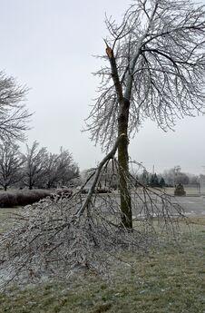 Free Ice Storm Damage Stock Photo - 69051280