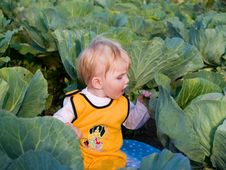 Child Eats Cabbage Stock Images