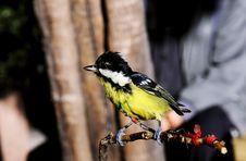 Free Little Bird Royalty Free Stock Photo - 6913635