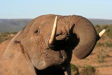 Free Massive Elephant Bull Eating Royalty Free Stock Photo - 6913715