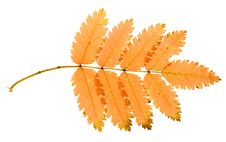 Free Autumn Leaf Royalty Free Stock Image - 6914276