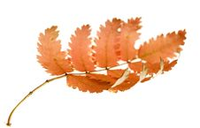 Free Autumn Leaf Royalty Free Stock Photography - 6914287