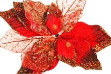 Free Red Leaf Stock Photos - 6914603