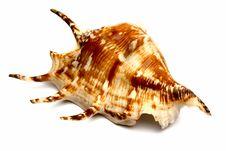 Free Sea Souvenir A Cockleshell Stock Image - 6914961