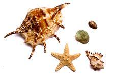 Free Set Of Sea Souvenirs Royalty Free Stock Photo - 6915055