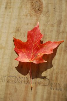 Free Fall Leaf On Table Stock Images - 6915194