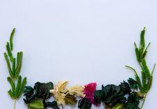 Free Herbarium Stock Image - 6916571