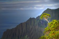 Tree Growing On A Mountain On The Napali Coast Royalty Free Stock Image