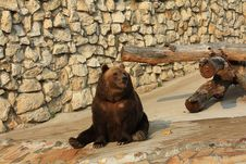 Free Brown A Bear Royalty Free Stock Images - 6918239