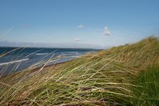 Free Tall Dune Grass View Stock Photo - 6919540