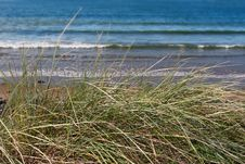 Free Tall Dune Grass Stock Image - 6919591