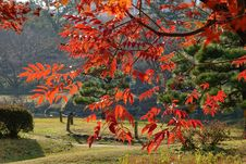 Free Leaves Turn Red And Orange In Autumn In Tokyo, Japan Royalty Free Stock Images - 69134869