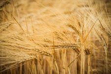 Free Fertile Soil Stock Photo - 69144290