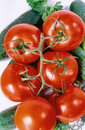 Free Tomato Branch Vertical Stock Image - 6923981