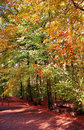 Free Beech Forest In Autumn Stock Photo - 6925260