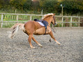 Free Horse With No Rider Stock Photos - 6925553