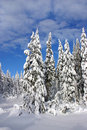 Free Winter In The Woods Royalty Free Stock Image - 6928406