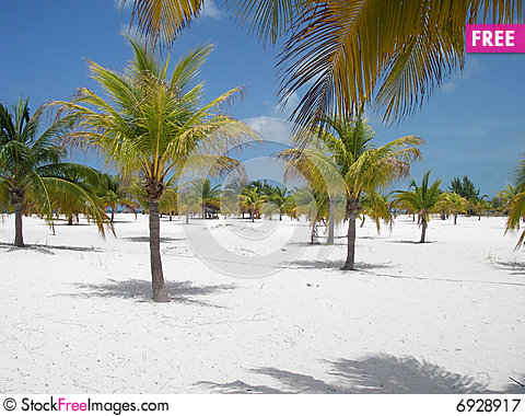 Free Palm Forest Beach Paradise Royalty Free Stock Photography - 6928917