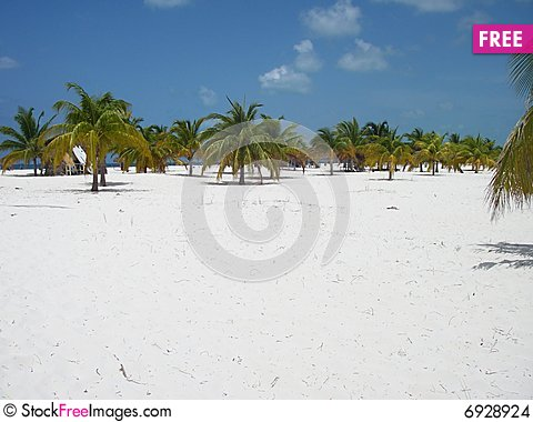 Free Palm Forest Beach Paradise 2 Stock Images - 6928924