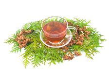 Medicinal Coniferous Plant Stock Photos