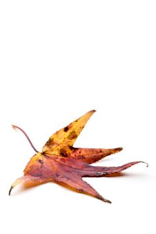 Free Autumn Leaf Stock Images - 6920714