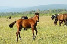 Free Foal Royalty Free Stock Photography - 6920927