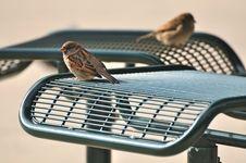 Free Two Birds Stock Photos - 6921523