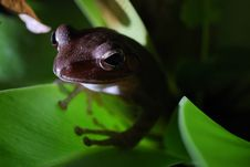 Free Small Toad Stock Photography - 6921822