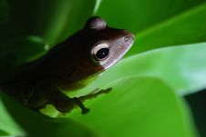 Free Small Toad Royalty Free Stock Photos - 6921828