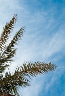 Free Palm And Sky Stock Photography - 6922302
