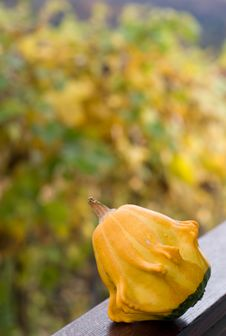 Free Pumpkin On Nice Background Royalty Free Stock Photos - 6923458