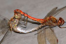 Free Dragonfly Stock Photos - 6927733