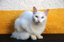 Free White Multi Coloured Eye Cat Stock Images - 6928314