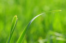 Free Soft Green Grass Royalty Free Stock Photos - 6928428