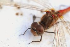 Free Dragonfly Stock Photo - 6928920