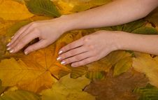 Free Female Hands Against Leaves Stock Photography - 6929852