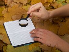 Free Office On Leaves Stock Photos - 6929873