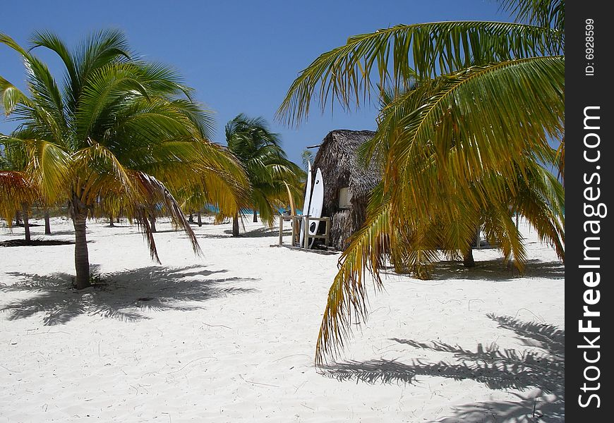 Caribbean Beach, Palms, Surf