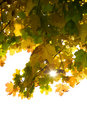 Free Autumn Leaves Royalty Free Stock Image - 6930226