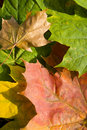 Free Autumn Leaves Stock Photo - 6930230