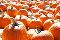Free Pumpkin Patch Stock Images - 6932894