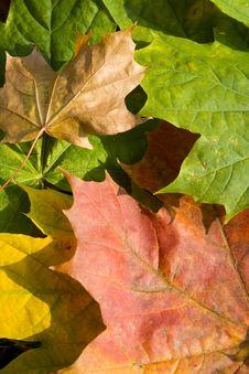 Free Autumn Leaves Stock Photo - 6930230