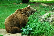 Free Brown Bear Royalty Free Stock Image - 6930576