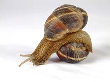 Free Snail Stock Image - 6930661
