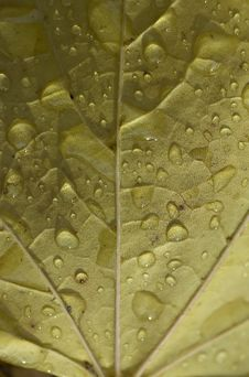 Free Leaf With Drops Stock Images - 6931304