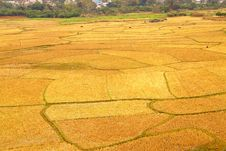 Free Rice Fields Stock Images - 6931804